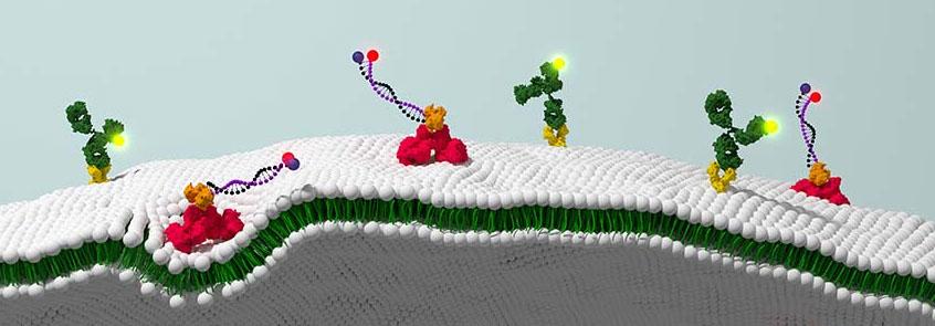 Molecular Sensors