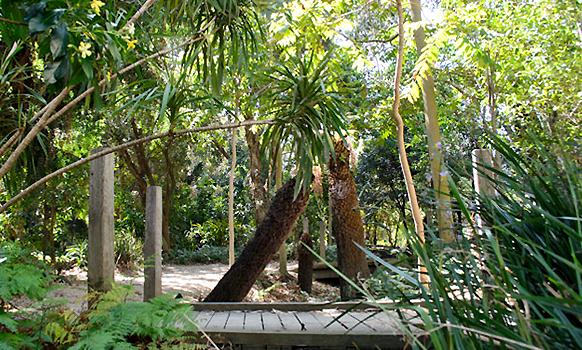 Gardens at Clayton