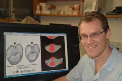 Dr Alistair Evans showing the shape of fossil rodent teeth alongside computer simulations of tooth development. Credit: Laura Murphy