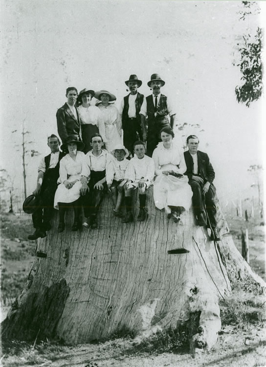 Group on a big stump