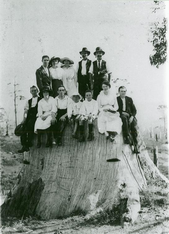 Group on a big stump