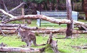 Kangaroo with exclusion plot
