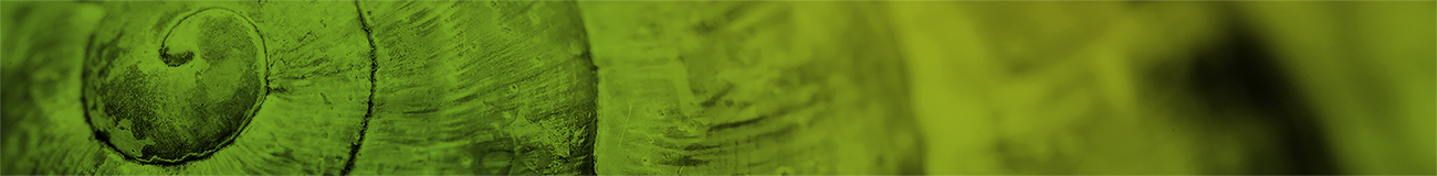 Spiral shell macro green