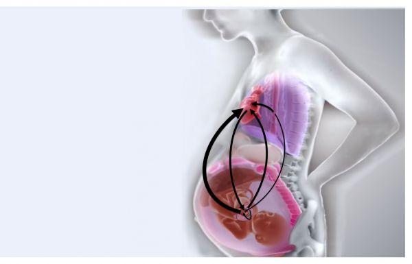 Fetal-Maternal Cardiorespiratory Interactions