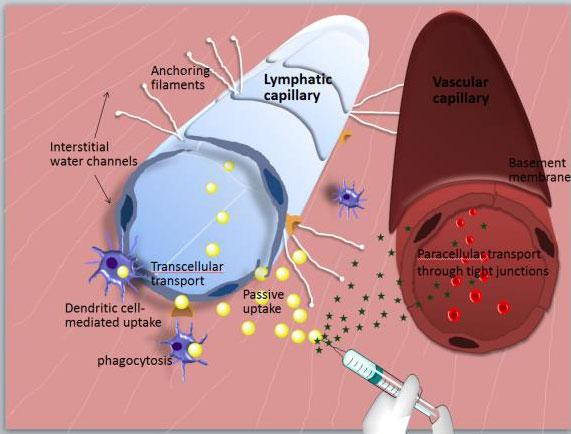 Targeting lymphatic metastases