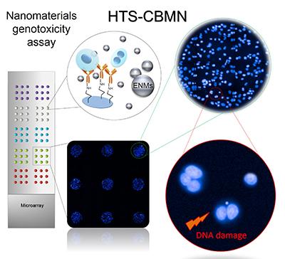 Nanomaterials genotoxicity assay