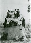 Show Group on a big stump