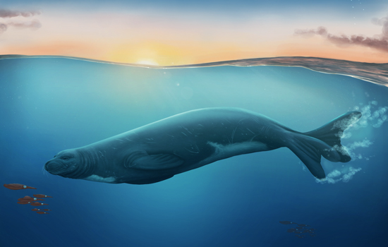 An artist's impression of Eomonachus belegaerensis.