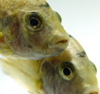 Variation in fish faces. Image: Dr Matt McGee.