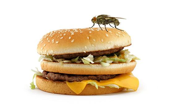 Fly diet
