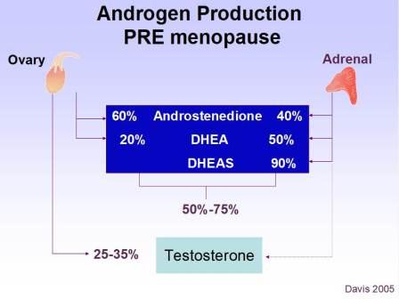 Androgen Production