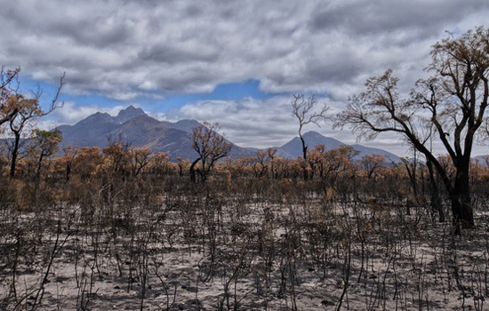 bushfire affected land