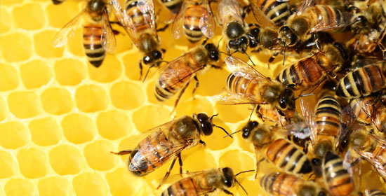A World Without Bees Simulating Important Agricultural Insect Pollinators