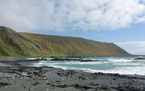Hasselborough Bay, Macquarie Island