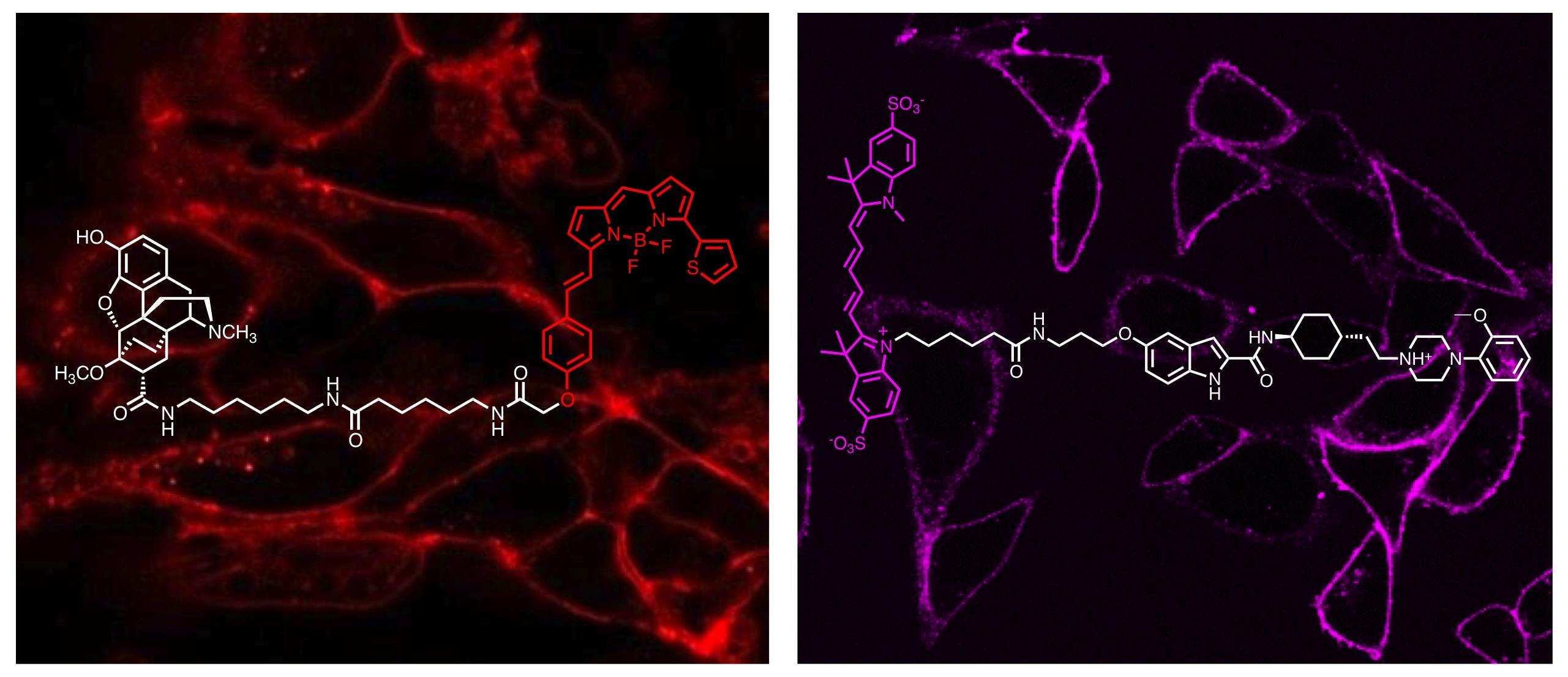 medicinal chemistry bio