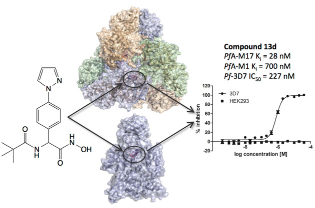Structure-based design of novel anti-bacterial drugs