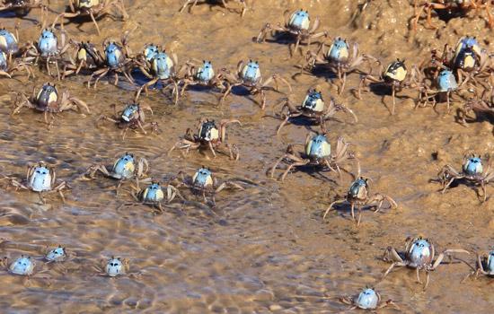 beaches clean our oceans