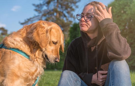 canine-court-companion-550x350.jpg