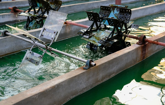 Growth industry: Microalgae such as spirulina can be farmed.
