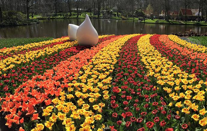 Exchange program tulips