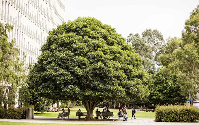 students sitting under large tree