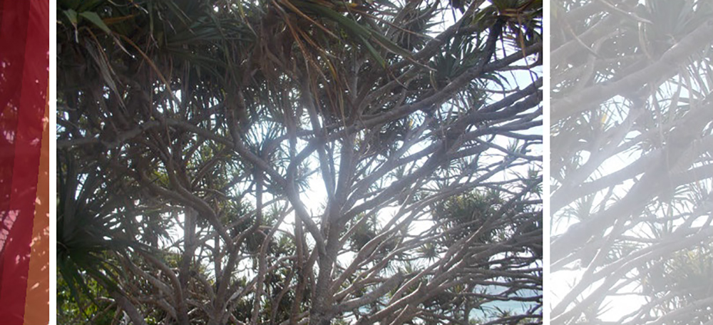 Tangled branches of trees