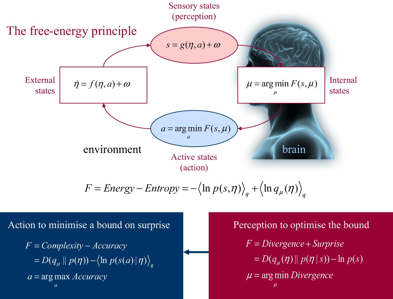 The free energy principle flowchat