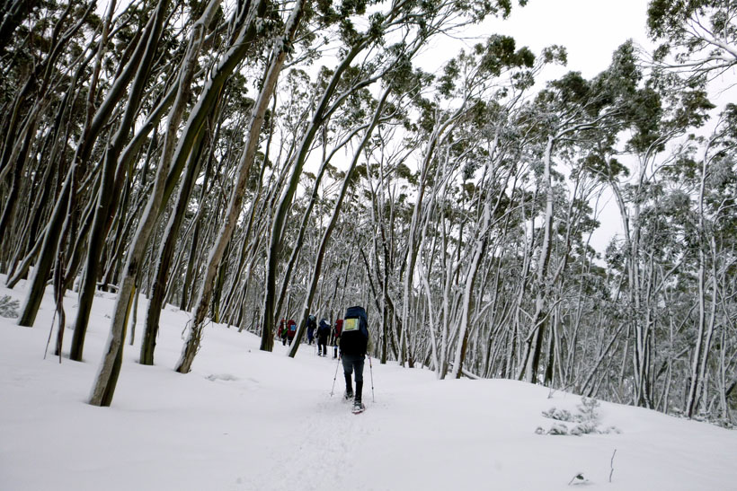 Hiking in the snow at Mt Baw Baw National Park, Australia