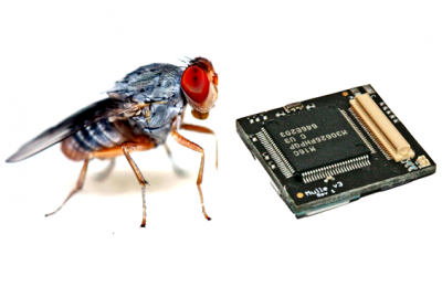 What do you get if you cross a fruit fly with a Mulle wireless sensor?