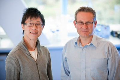 Professor Tony Tiganis (r) with research team member, Kim Loh
