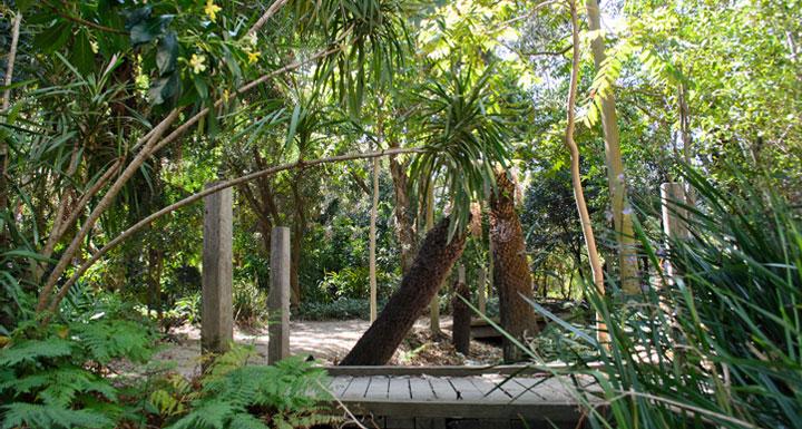 Clayton rainforest garden