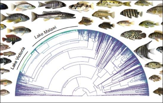 Species-Chart
