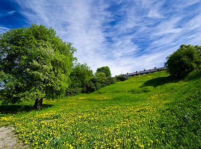 summer field in finland