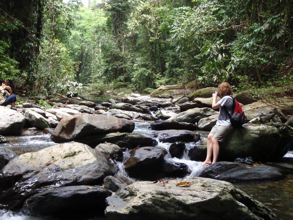 jungles of Borneo